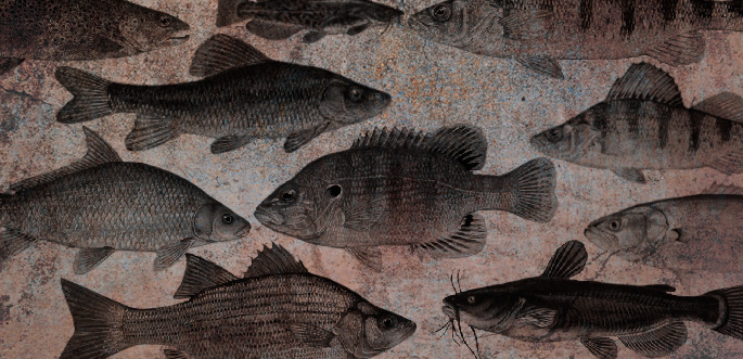 Different Fish photoshop brushes free download
