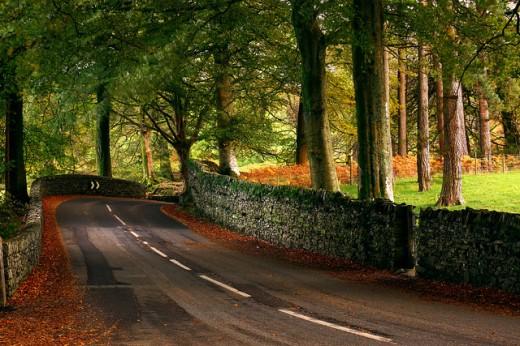 Autumn Road by Suicine