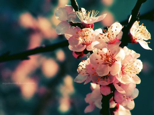 30 Inspirational Spring Wallpapers For Your Desktop