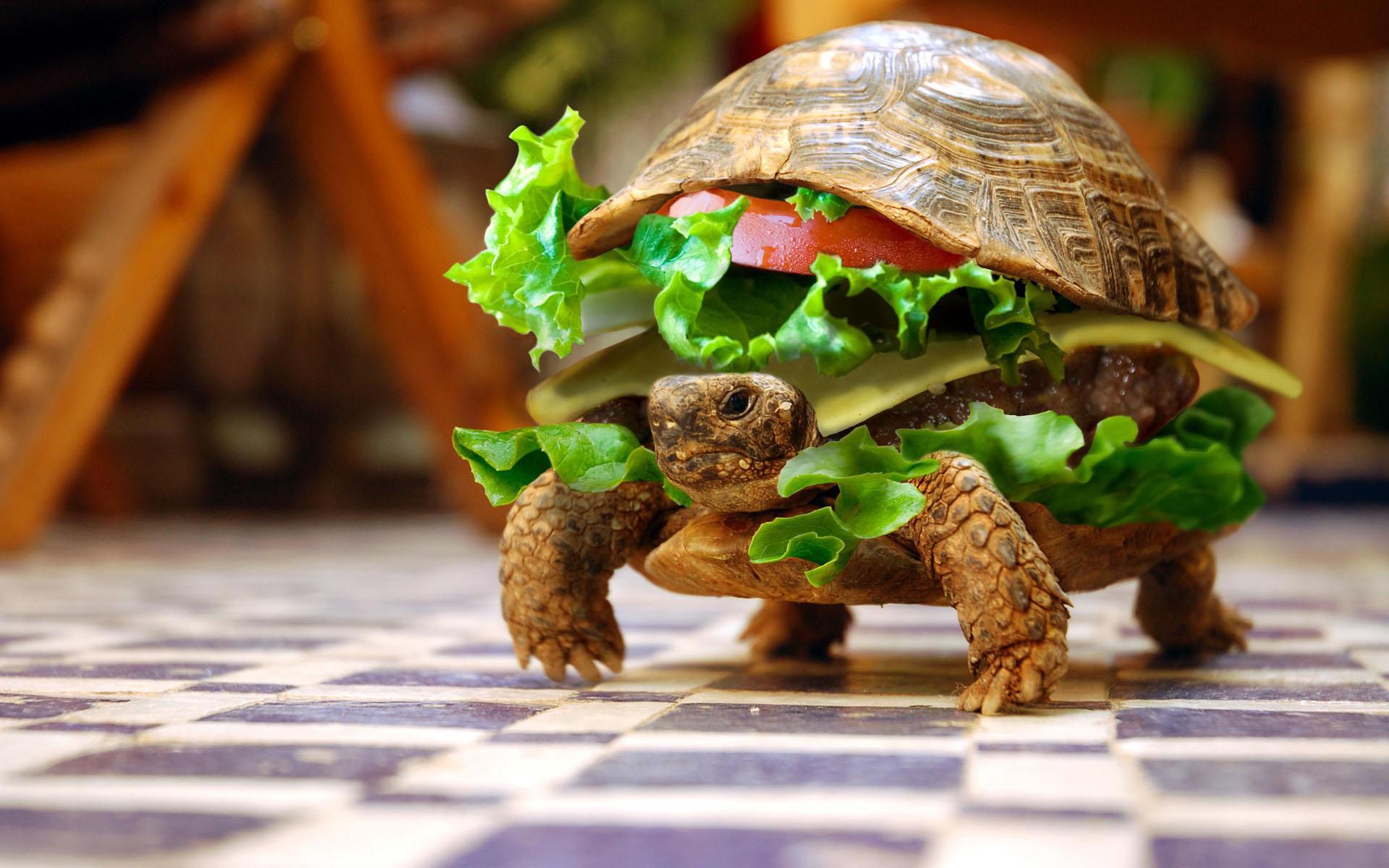 Cool Turtle Wallpaper