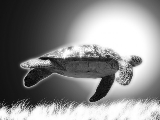 Turtle Wallpaper for Desktop